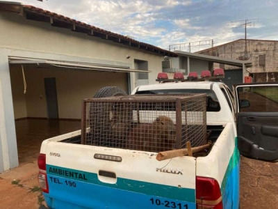 Capivara é capturada dentro de motel